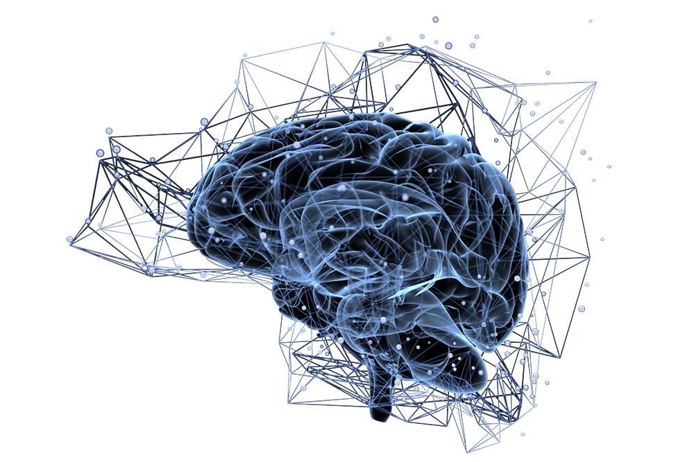 brain neuro pathways